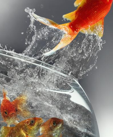 Entraine ton poisson rouge etat des faits for Kit poisson rouge