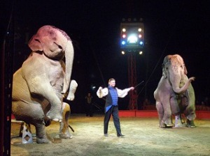elephants de cirque